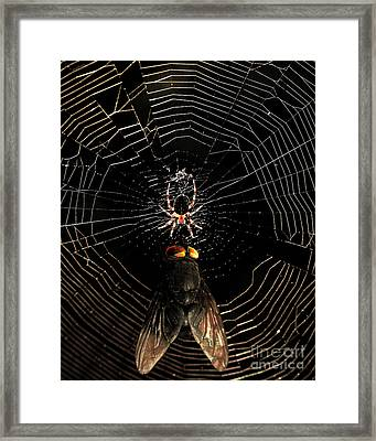The Spider  And The Fly Framed Print by Wingsdomain Art and Photography