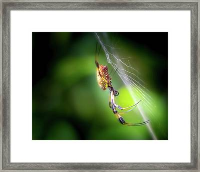 The Spider In The Forest Framed Print