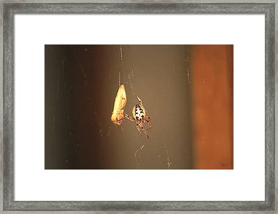 The Spider On The Feed Framed Print