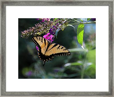 The Splendor Of Nature Framed Print by Gerlinde Keating - Galleria GK Keating Associates Inc