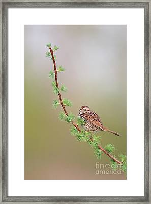The Spring. Framed Print