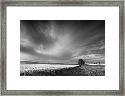 The Spring Leader Framed Print
