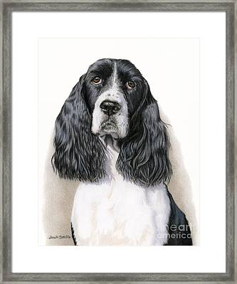 The Springer Spaniel Framed Print by Sarah Batalka