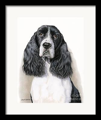 Spaniels Drawings Framed Prints
