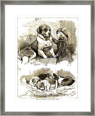 The St Bernard Club Dog Show Framed Print