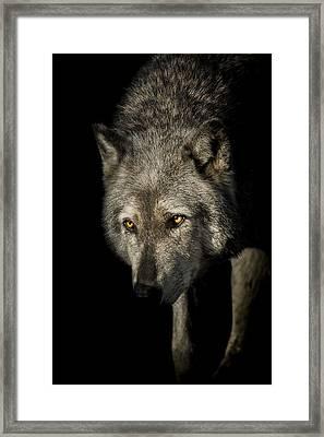 The Stalker Framed Print by Paul Neville