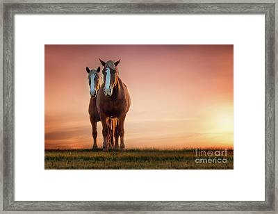 The Stallion And The Mare Framed Print by Tamyra Ayles