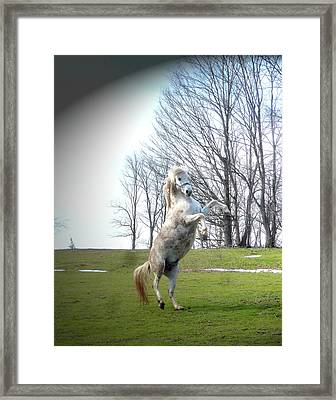 The Stallion Dancer Framed Print