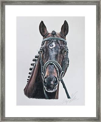 The Stallion Don Principe  Framed Print