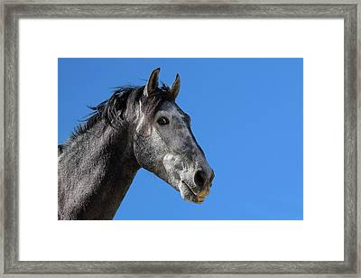 The Stallion Framed Print