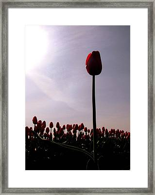 The Stand Out Framed Print by Karla DeCamp