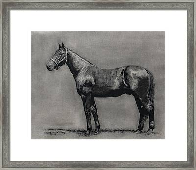 The Standardbred Framed Print by Thomas Allen Pauly