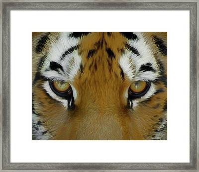 The Stare Da Framed Print