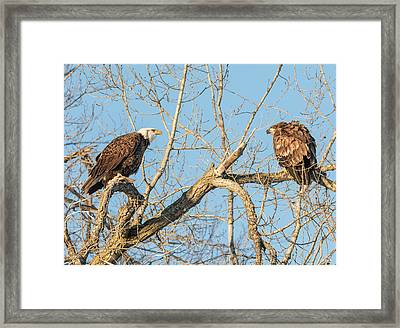 Framed Print featuring the photograph The Stare Down 2017-1 by Thomas Young