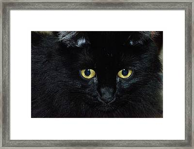The Stare Down Framed Print by Camille Lopez