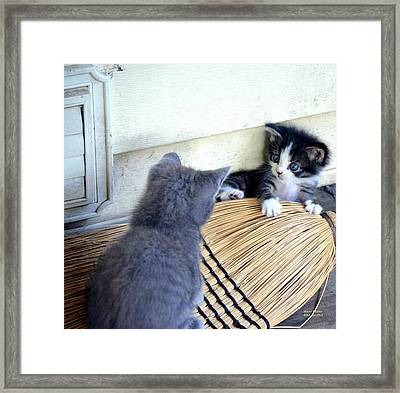 The Stare Down Framed Print by Maria Urso