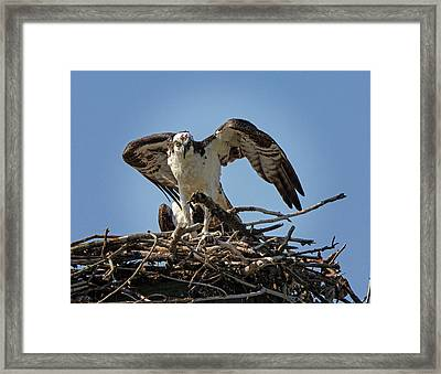 Framed Print featuring the photograph The Stare by Robert Pilkington