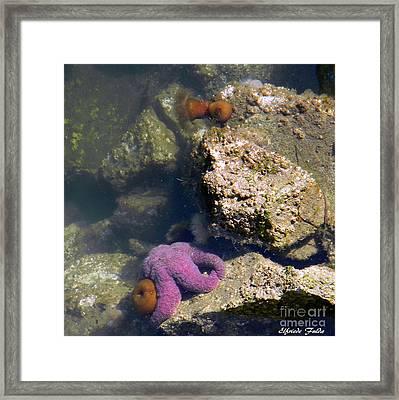 The Starfish Framed Print