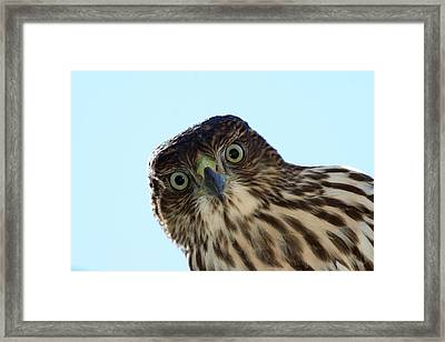 The Staring Competition Framed Print