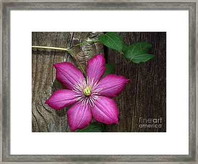 The Still Life Of A Flower 2 Framed Print by Diane M Dittus