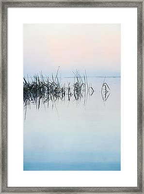 The Stillness Of Life Framed Print by Shelby  Young