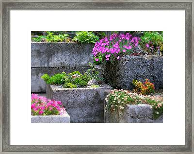 The Stone Planters Framed Print by Diana Angstadt