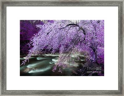 The Stream's Healing Rhythm Framed Print