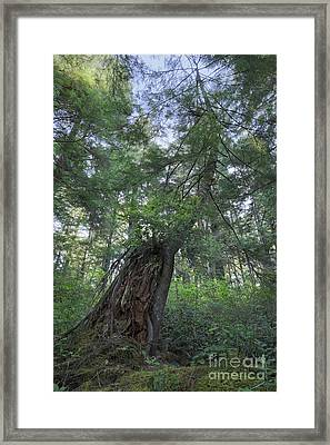 The Strength Of Nature Framed Print by Masako Metz