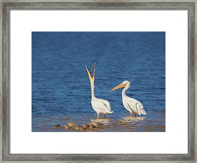 Framed Print featuring the photograph The Stretch by Kim Hojnacki