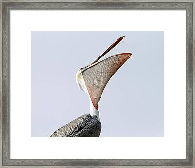 The Stretch  Framed Print by Shoal Hollingsworth