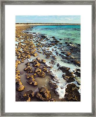 The Stromatolite Family Enjoying Its 1277500000000th Sunset Framed Print