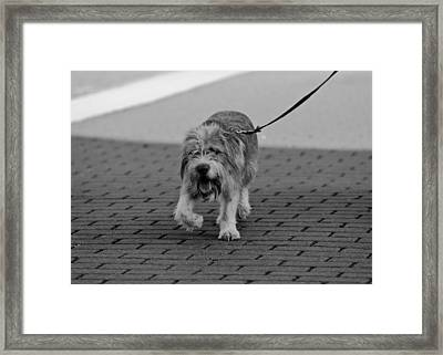 The Strut Framed Print by Edward Myers