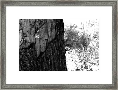 Framed Print featuring the photograph The Stump Of Time by Don Youngclaus