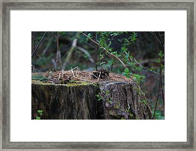 The Stump Framed Print
