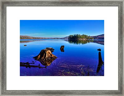 The Stumps In Seventh Lake Framed Print by David Patterson