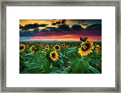 The Summer Winds Framed Print by John De Bord