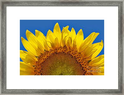 The Sun Also Rises Framed Print by Wendy Mogul