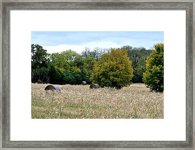 The Sun Is Still Shining Framed Print
