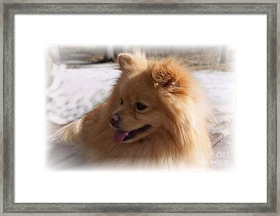 The Sun On My Back Framed Print by Joanne Smoley