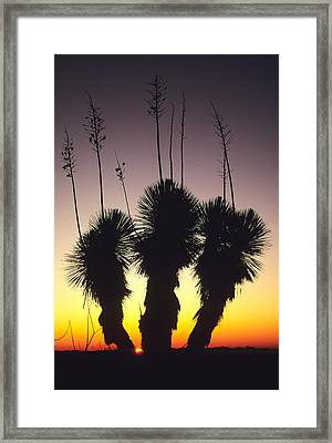 The Sun Sets Behind A Stand Of Yucca Framed Print by Bill Hatcher