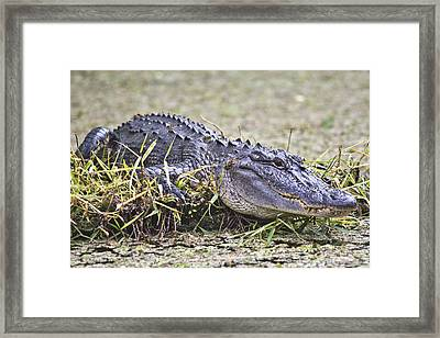 The Sunbather Framed Print by Betsy Knapp