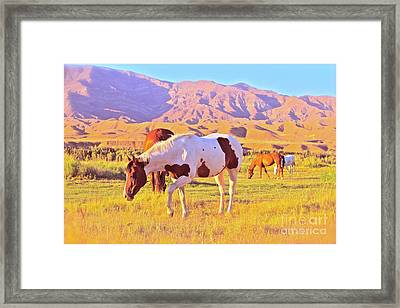 'the Sundowners' Framed Print
