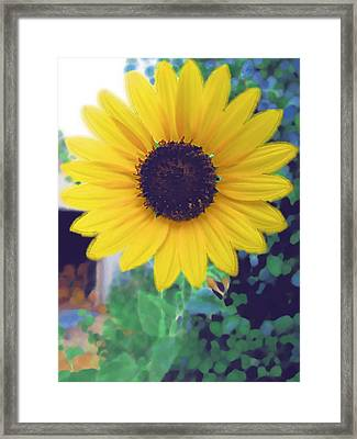 The Sunflower Framed Print by Chuck Shafer