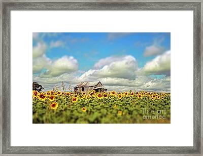 The Sunflower Farm Framed Print