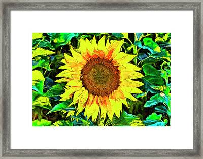 The Sunflower Framed Print by Mark Kiver