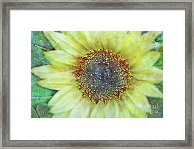 The Sunflower Framed Print by Tara Turner