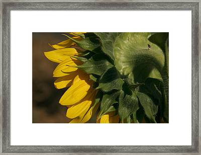 The Sunflowers Layers Framed Print by Heather Perry