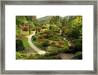 The Sunken Garden At Butchart Gardnes Framed Print by Darlyne A. Murawski