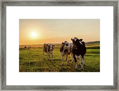 Framed Print featuring the photograph The Sunset Graze by Joel Witmeyer