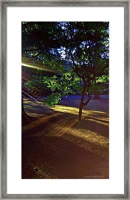 The Sunset Grove  Framed Print by Karl Reid